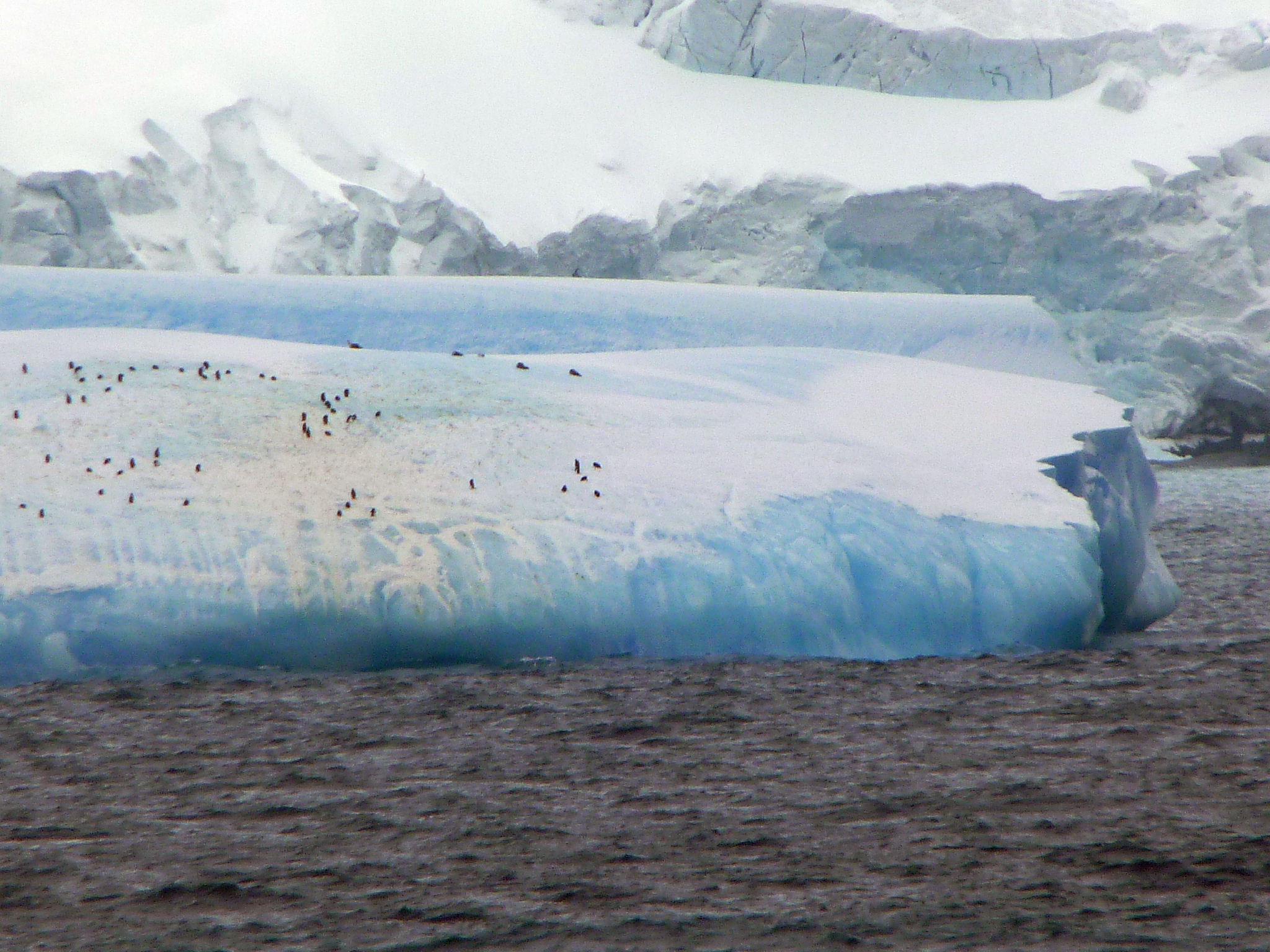146 icebergs penguins antarctica wildlife 6 for Antarctica places to stay